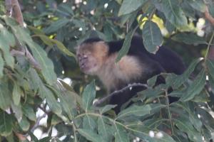 MonkeyINtree